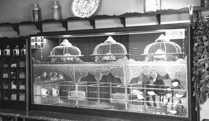 ARMADA BIRDS