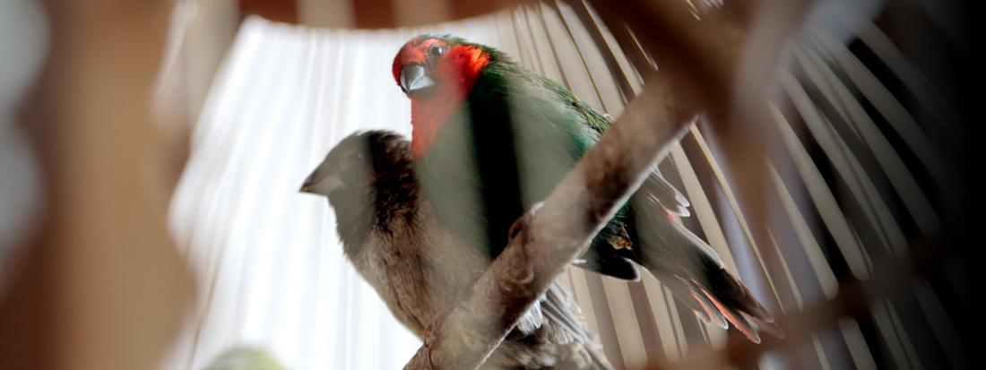 ARMADA<br />BIRDS