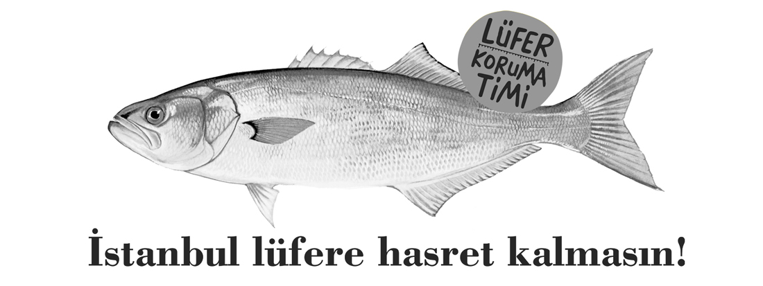 PROTECT THE<br />BLUEFISH CAMPAIGN